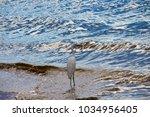 a beautiful graceful white...   Shutterstock . vector #1034956405