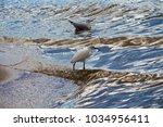 a beautiful graceful white...   Shutterstock . vector #1034956411