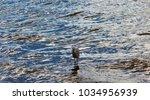 a beautiful graceful white...   Shutterstock . vector #1034956939