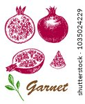 whole and half garnet with seed....   Shutterstock .eps vector #1035024229