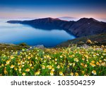 Beautiful flowers awaken in the morning on Santorini - stock photo