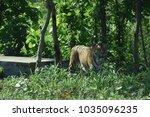 wild life safari | Shutterstock . vector #1035096235
