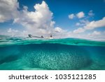 swimming with fish and turtles  ... | Shutterstock . vector #1035121285