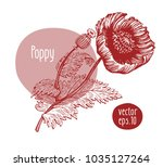 hand drawn vintage poppy.... | Shutterstock .eps vector #1035127264