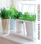 herb pots on the windowsill ... | Shutterstock . vector #1035182101