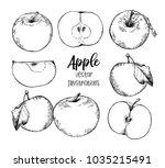 hand drawn vector illustrations ... | Shutterstock .eps vector #1035215491