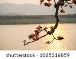 branch of blossoming bombax... | Shutterstock . vector #1035216859