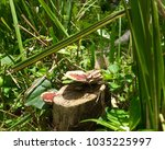 A Close Up Of Bracket Fungus In ...