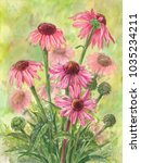 watercolor echinacea bouquet.... | Shutterstock . vector #1035234211