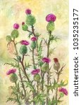 watercolor thistle illustration.... | Shutterstock . vector #1035235177
