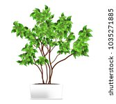 spotted plant  ficus  pipal  in ... | Shutterstock .eps vector #1035271885