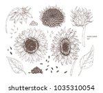bundle of elegant botanical...   Shutterstock .eps vector #1035310054