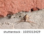 Small photo of Spider (arachnida) on brickstone