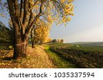 golden tree in the tea... | Shutterstock . vector #1035337594