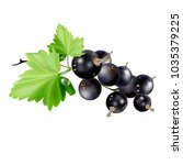 berries of black currant with...   Shutterstock .eps vector #1035379225