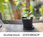 tree on wood table blurred... | Shutterstock . vector #1035380629
