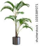 decorative areca palm tree...   Shutterstock . vector #1035389371
