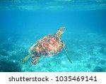 sea turtle in clear blue sea... | Shutterstock . vector #1035469141