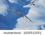 Small photo of Bent grass in winter. Frozen reed