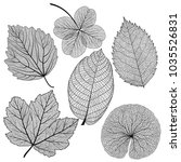 set leaves of black on white....   Shutterstock .eps vector #1035526831