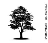 tree silhouettes on white... | Shutterstock .eps vector #1035526861