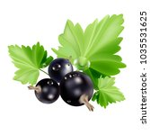 currant berries with leaves.   Shutterstock .eps vector #1035531625
