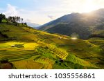 rice fields on terraced of mu... | Shutterstock . vector #1035556861
