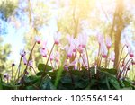 low angle view image of fresh... | Shutterstock . vector #1035561541