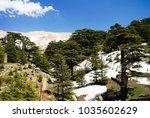 lebanese cedars at the arz ar... | Shutterstock . vector #1035602629