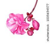 realistic tropical flower... | Shutterstock .eps vector #1035654577