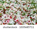 white  pink and red rose petals ... | Shutterstock . vector #1035685711