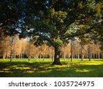 old tree in a meadow | Shutterstock . vector #1035724975