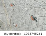 a flock of bullfinches ... | Shutterstock . vector #1035745261
