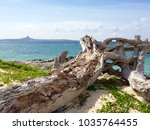 large driftwood tree trunk on... | Shutterstock . vector #1035764455