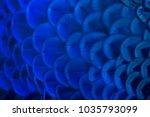 closeup peacock feathers ...   Shutterstock . vector #1035793099