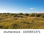 Rural Dry Bush And Grassland...