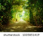 road in forest at morning | Shutterstock . vector #1035851419