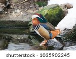 Small photo of Aix Galericulata - duck of a mandarin male at a lake in winter.