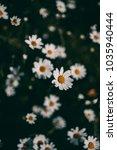daisies vintage background.... | Shutterstock . vector #1035940444