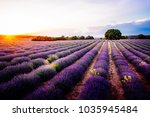 lavender fields. summer sunset...   Shutterstock . vector #1035945484