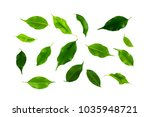 leaf isolated on white | Shutterstock . vector #1035948721
