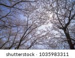 branches of cherry blossom... | Shutterstock . vector #1035983311