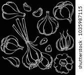 garlic  vegetable  vector | Shutterstock .eps vector #1035987115