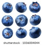 isolated blueberries collection.... | Shutterstock . vector #1036004044