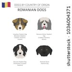 dogs by country of origin.... | Shutterstock .eps vector #1036004371