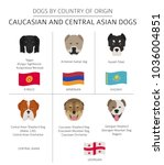 dogs by country of origin.... | Shutterstock .eps vector #1036004851