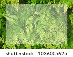 white frame for text in closeup ... | Shutterstock . vector #1036005625