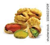 fresh walnut  nutritious... | Shutterstock .eps vector #1036021939
