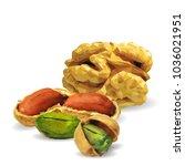 fresh walnut  nutritious... | Shutterstock .eps vector #1036021951