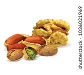 fresh walnut  nutritious... | Shutterstock .eps vector #1036021969